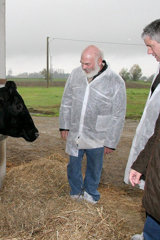 "I meet a ""Brunalpina"" cow, whose milk is used to make Lucini organic Parmigiano Reggiano. The cows on Lucini's farm eat only organic alfalfa that is cultivated in the fields around the closed-circuit farm, and are in compliance with the highest organic farming standards."