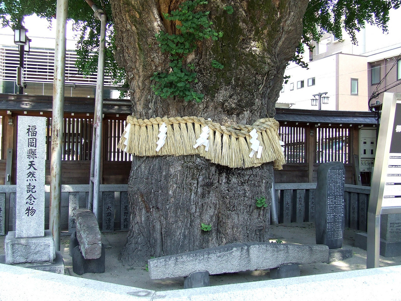 "In the shrine's yard grows an 800-year-old ginkgo tree.The tradition of wrapping tree trunks or adorning branches of special trees is a visual statement that says, ""We honor this tree and respect its vital presence."" It is often done with fiber rope , natural ribbon, or fabric."
