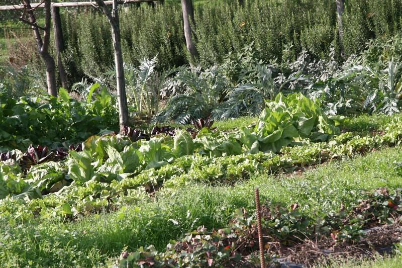 Beautiful Organic Vegetable Garden
