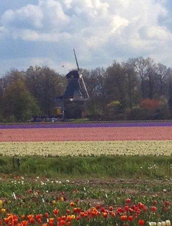 The Netherlands are famous for their windmills and tulips.