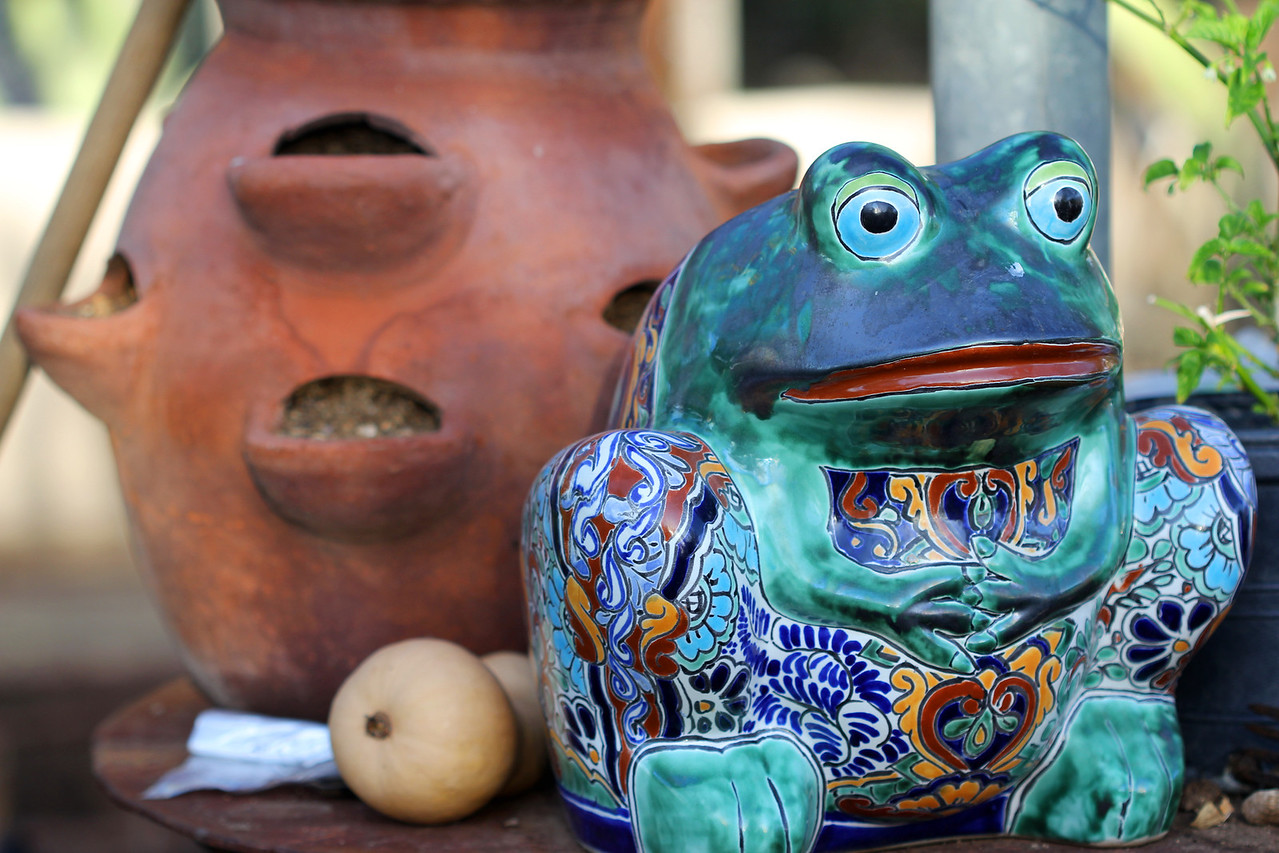 Garden frog at the Hacienda del Sol in Tucson, Arizona