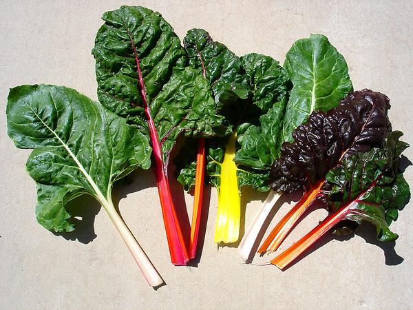 My Organic Vegetable Garden in Arizona