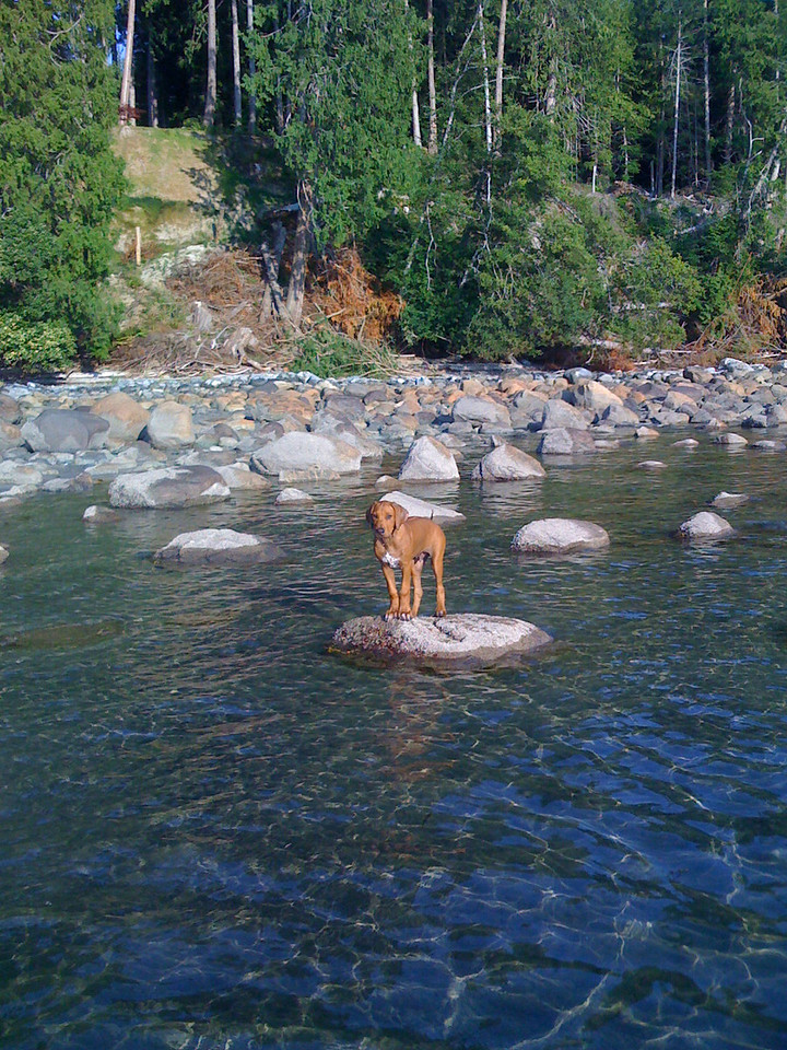 On a rock in the ocean near my home in Cortes Island, B.C., Ajax waits for me to pick him up in my boat.