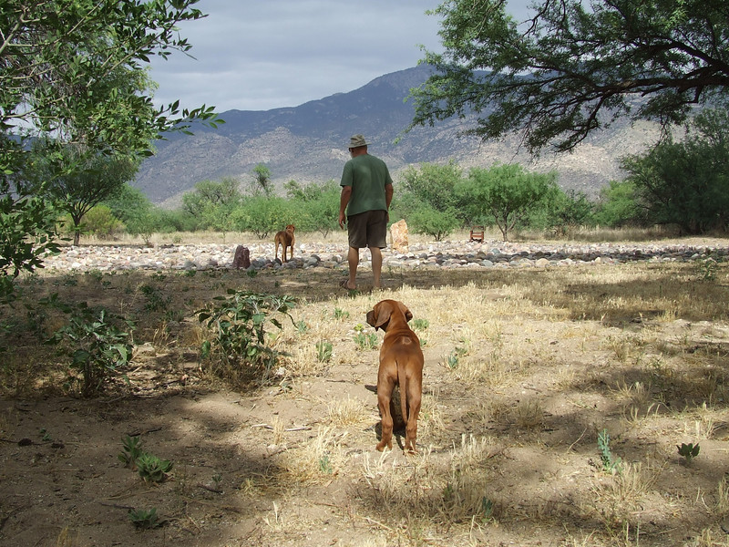 Ajax, Asha and I enjoy a nice afternoon's walk in the labyrinth near my Tucson home.