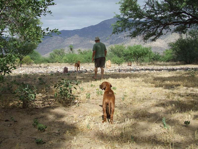 Ajax, Asha and I enjoy a nice afternoon's walk in the labyrinth near my Tucson home.