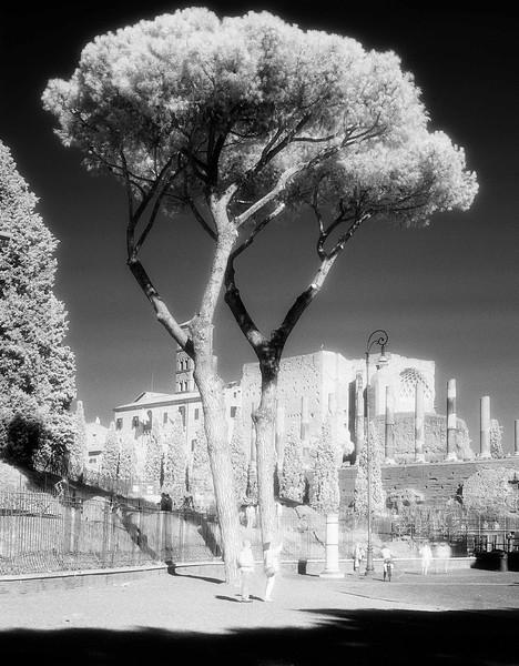 11 Rome 8