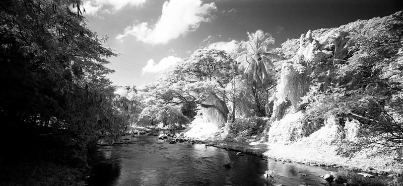 25  Jungles 3