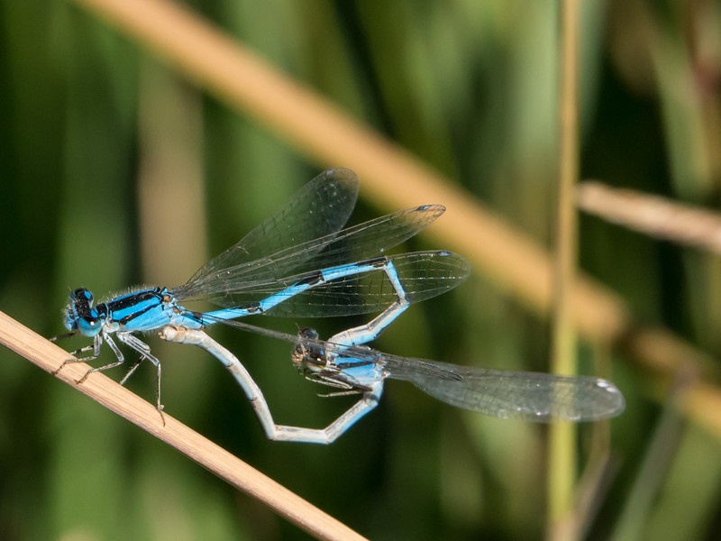 Familiar Bluets