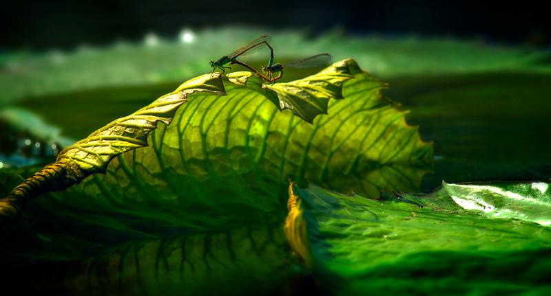Dragonflies-059.jpg