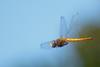 dragonfly, flightgg