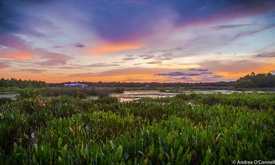 Sky Ablaze at Green Cay Wetlands II