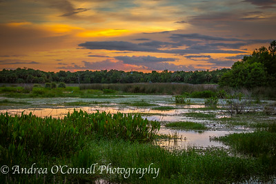 Sky Ablaze at Green Cay Wetlands V