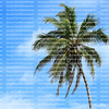 Close up of a coconut palm tree blowing in the wind with blue skies and white clouds in the background.