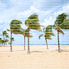 Strong winds sway palm trees as Hurricane Dorian passes the east coast of Florida.