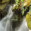 Tropical waterfall cascading over moss covered boulders
