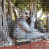 EDITORIAL USE ONLY:  PINECREST, FLORIDA, USA:  Troll art at Pinecrest Botanical Gardens.  Danish artist, Thomas Dambo, creates art out of recycled materials found at the garbage dump, as seen on May 23, 2021.