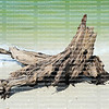 Eroding tree trunk