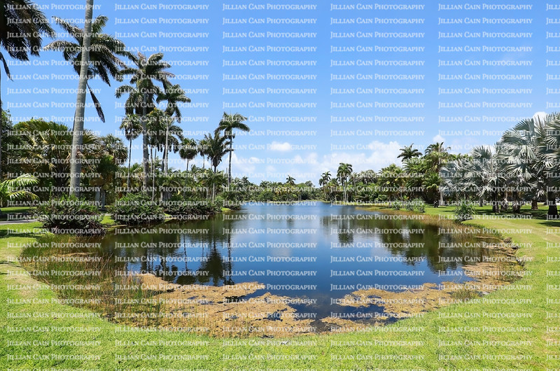 Curved lake at Fairchild Tropical Botanical Gardens.  Fairchild is a world premier tropical garden, with the largest collection of palm and cycads in 83 acres.