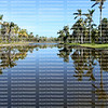 Beautiful palm trees reflected in Center Lake at Fairchild Botanical Gardens. Fairchild is a world premier tropical garden with the largest collection of palm and cycads in 83 acres.
