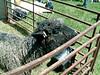 2005-05-08-0778 avi