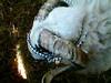 2005-05-08-0801 avi