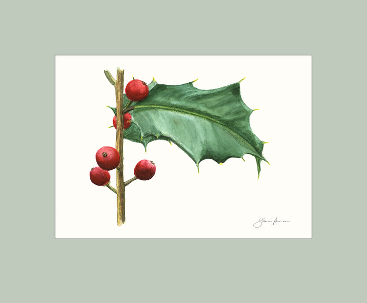 "American Holly - Watercolor 5"" x 7"" (excluding mat)"