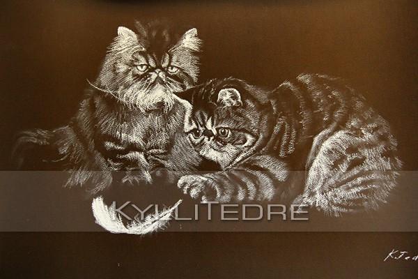 Hullud kassid  pastell 2008, 40x50 cm