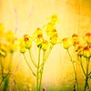 Digital Watercolor of Delicate Textured Yellow Wildflowers Background