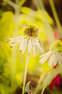 Macro Textured Coneflower Floral Background