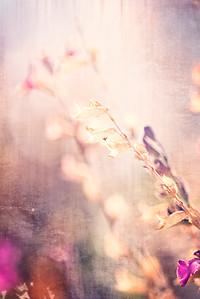 Textured Floral Background