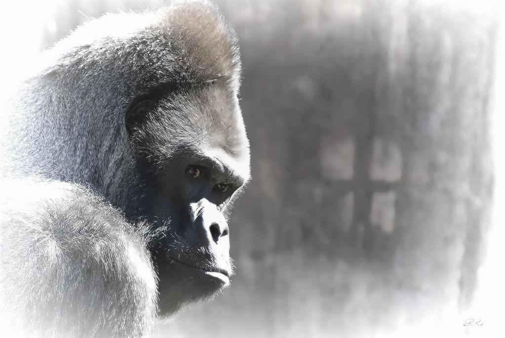 Ape Dream