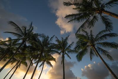Palm lit