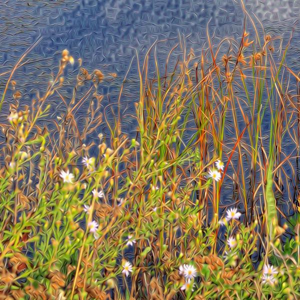 Pescadero Marsh Natural Preserve - Detail #4
