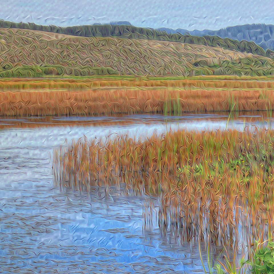 Pescadero Marsh Natural Preserve - Detail #2