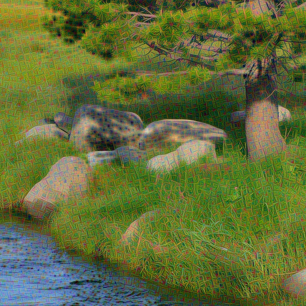 Squaw Creek Vista - Detail #1