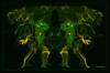Dancing Frogs  1999  w6