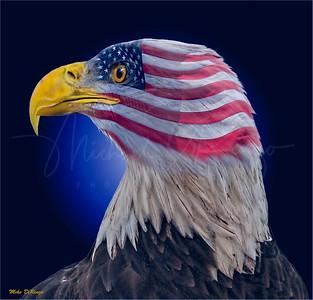 American Eagle 5673 w52