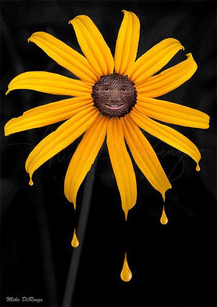 Black Eyed Susan 2994