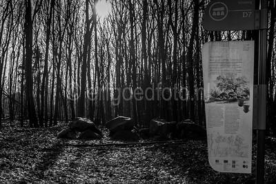 Schipborg - Hunebed D07