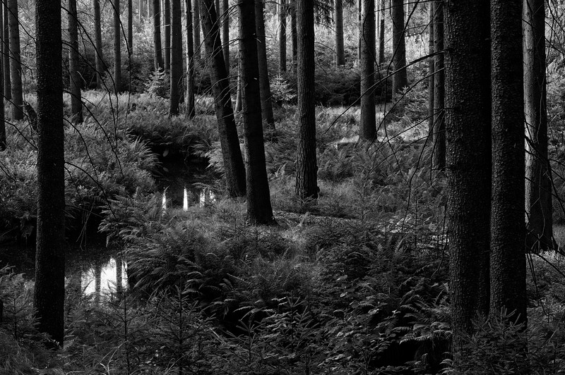 Dresden Heath on a tranquil morning in August (b/w)