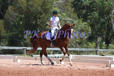 Swan RIver Dressage Young Horse Classes