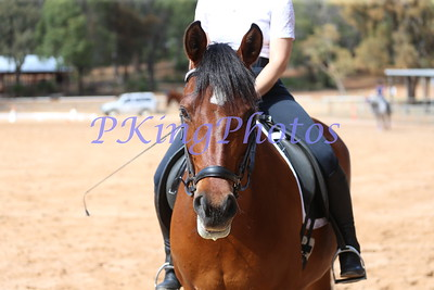 Breast Cancer Care WA Open Dressage Training Day