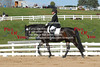 BLMs OCT 2012 Dressage Finals : 312 galleries with 9388 photos
