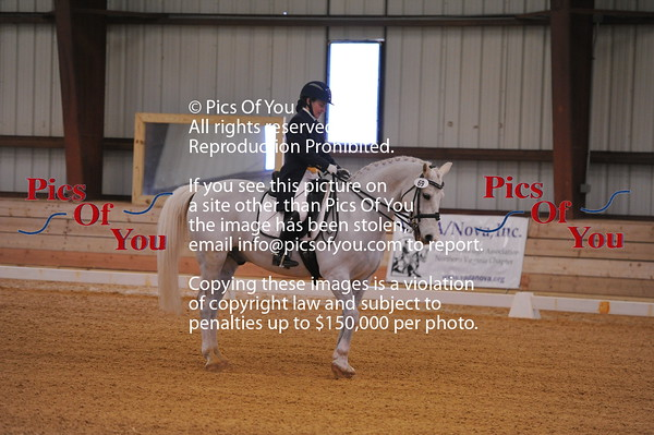 Dressage and DSHB Events