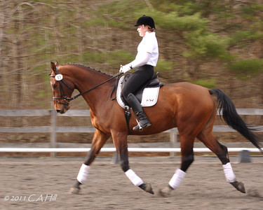 Natalie/ Kerrigold 'parade of horses' (panning - for a class I am taking)