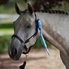 fancy halter, fancy ribbon