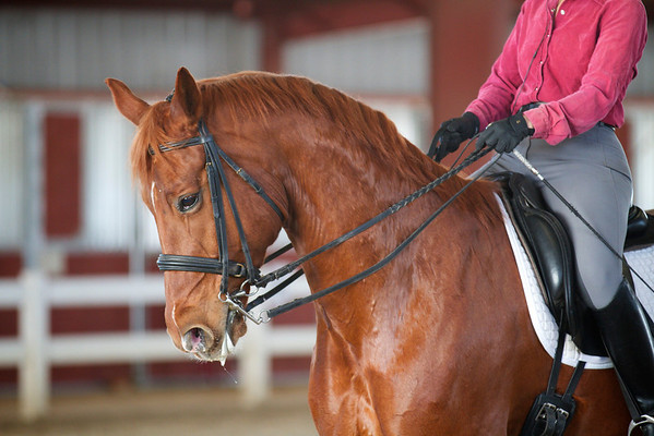Ellen Eckstein Clinic at Santa Rosa Equestrian Center