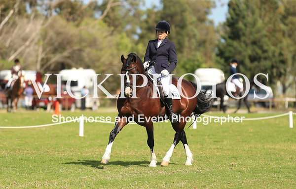 Transitions Dressage Day