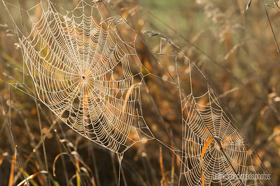 Glistening Webs