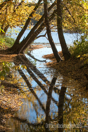 Backwaters Reflection